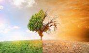 Lutte contre le changement climatique : la Covid-19, une opportunité à saisir